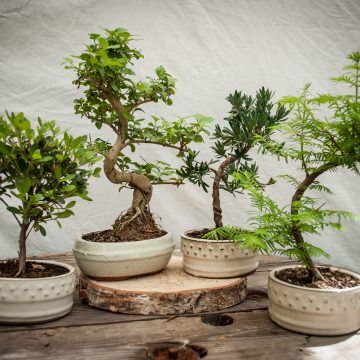 Bonsai Online Bomboniere Green